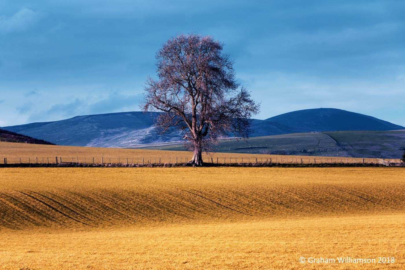 Branton Oak Autumn